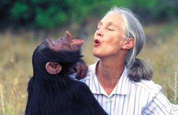 Jane Goodall nyomában
